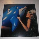 Kaj je videl delfin? (foto: Jasmina Hasković)