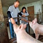 Erika Damijanu pomaga skrbeti tudi za prašiče. (foto: Goran Antley)