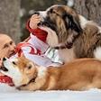 Vladimir Putin je nor na svoje pse
