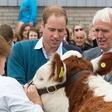 Princ William na srečanju kmetovalcev