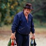 Igralec Gerard Depardieu obožuje delo v svojem vinogradu v Franciji.  (foto: Profimedia)