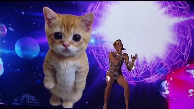 Dve mački, en oder (foto: YouTube)