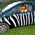 Tia Anna Paynich ustvarja modo za avtomobile