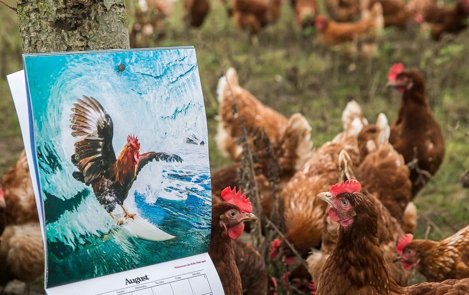 Puncam je koledar več kot očitno všeč ;) (foto: profimedia)