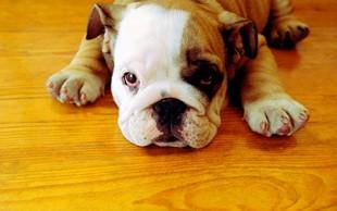 12 težav, ki jih razumejo le lastniki psov