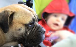V Celju bodo ta vikend na ogled psi z vsega sveta!