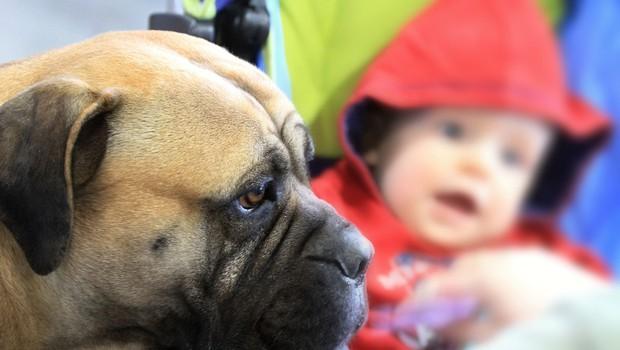 V Celju bodo ta vikend na ogled psi z vsega sveta! (foto: profimedia)