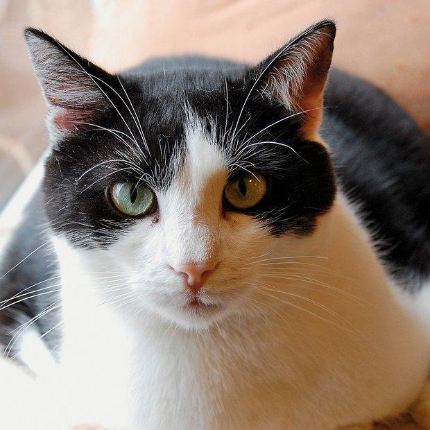 Lin je zapuščen mucek, ki je v naši oskrbi od marca 2013. Je nežen in prijazen muc, čedalje bolj družaben in igriv. Zelo rad ima družbo drugih. Je zdrav, cepljen, negativen na FeLV in FIV, kastriran in čipiran. Oddaja se pod pogoji Mačje hiše (www.macjahisa.si).