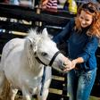 Regina je izbrala nagajivega ponija
