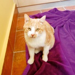 Rudi (foto: Lea)