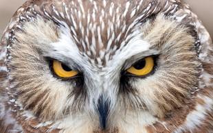 Vas je kdaj zanimalo, kako svet vidijo živali?