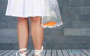 Plastične vrečke ne uporabljamo dlje kot pol ure, razkraja pa se 1000 let!