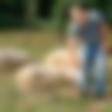 Gregor Češarek (Kmetija: Nov začetek): Ovce ga pomirjajo!