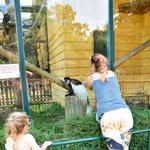 Tia Anna je uživala ob  pogledu na košato belo opico, ki bi ji kar spletla kitke.   (foto: Lea Press)