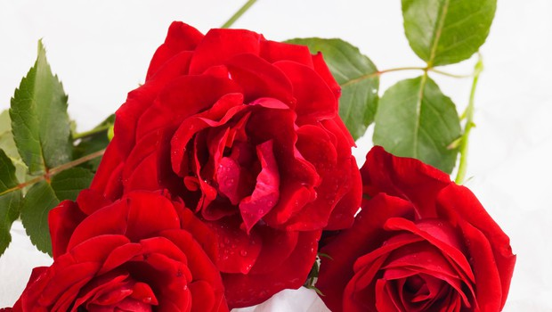Rožice za rožice v Cityparku (foto: profimedia)
