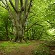 """Osho svetuje: """"Pogovarjajte se z drevesi!"""""""