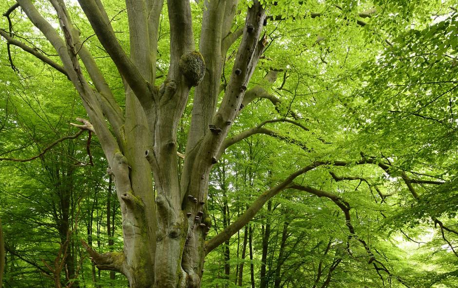 """Osho svetuje: """"Pogovarjajte se z drevesi!"""" (foto: profimedia)"""