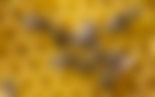 Ljubljanski grad z nizom dogodkov v okviru razstave Ohranimo čebele