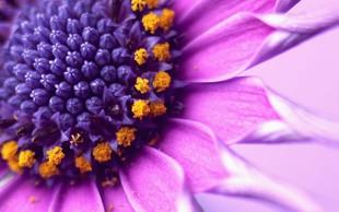 """Osho: """"Ljubezen ni kamen, temveč je cvet, in to redek cvet!"""""""