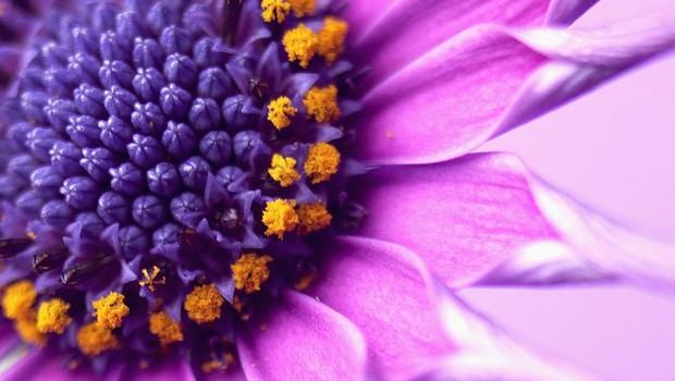 """Osho: """"Ljubezen ni kamen, temveč je cvet, in to redek cvet!"""" (foto: profimedia)"""