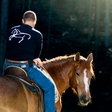 Boris Sušec: Slovenski šepetalec konjem