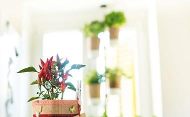 Anej Sirk: Vrtnar je lahko vsak izmed nas
