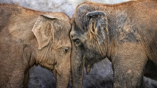 Osho: Samost ni osamljenost. Samost pomeni občutje popolnosti. (foto: Shutterstock)