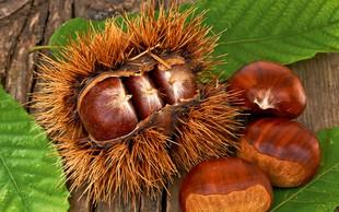 Kostanj: Plod jeseni, ki prinaša zdravje!