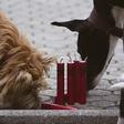 Pasja pekarna HOV-HOV z agencijo Luno s Crackin' Dog petardami za kužke in prvim pasjim radiom!