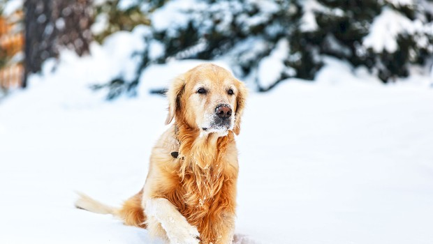 Pozimi je potrebno poskrbeti tudi za tačke naših najboljših prijateljev (foto: Shutterstock)
