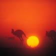 Narobe svet! Pri nas polarni mraz, v Avstraliji pa vročinski val s temperaturami do 40 stopinj!