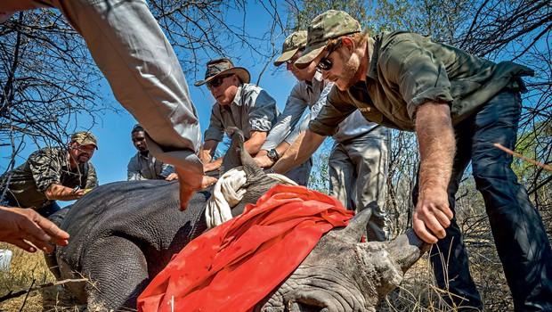 """Princ Harry: """"Nosorog je ena od najbolj ikoničnih afriških živali!"""" (foto: Profimedia)"""