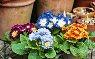 Jeglič je s svojimi pisanimi cvetovi prinašalec dobre volje