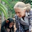 Jane Goodall: Človek ni edino bitje, ki prejema in daje ljubezen
