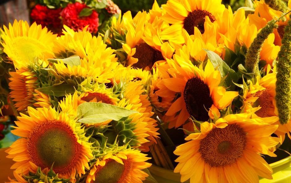 Spomladanski sejmi Flora, Poroka, Altermed in čebelarji že naslednji vikend! (foto: profimedia)