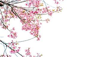 Sajenje sadnega drevja je eno izmed prvih opravil v prebujajoči se pomladi