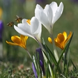 Vzemite si trenutek za Oshojevi meditaciji v poklon pomladi!