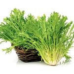 Zelenjavni vrt aprila: Zagotovite si spomladanske vrtnine (foto: Shutterstock)