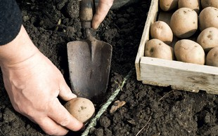 Zelenjavni vrt aprila: Zagotovite si spomladanske vrtnine