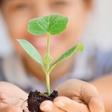 Zelemenjava: Menjava semen in sadik je dober primer skupnostne prakse