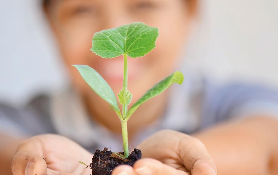 Zelemenjava: Menjava semen in sadik je dober primer skupnostne prakse (foto: arhiv Zelemenjave)