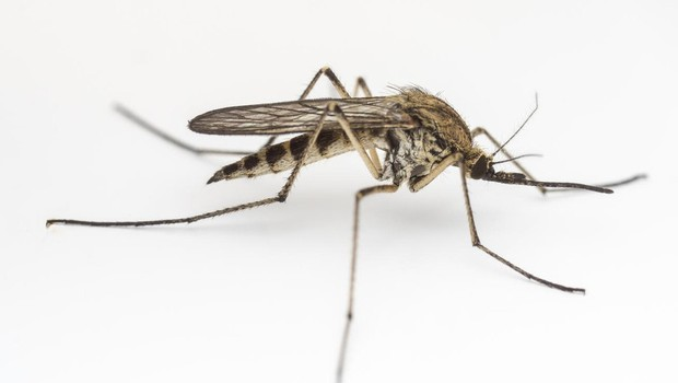 Na Dunaju razvili novo cepivo proti virusu zika (foto: profimedia)