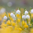 Družinsko praznovanje pomladi – Winspiration Day prvič v Sloveniji