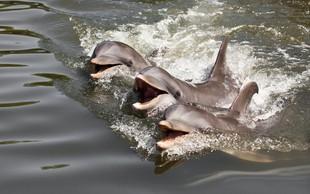 V Piranu danes dan delfinov