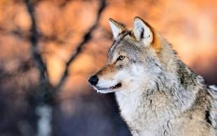 Šamansko verovanje v živali moči - imel naj bi jo vsak med nami