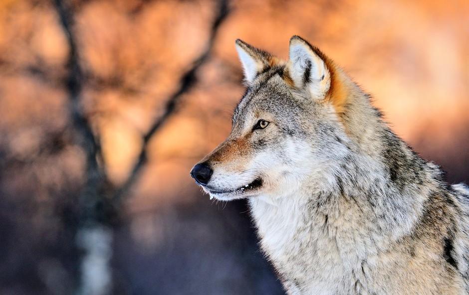 Šamansko verovanje v živali moči - imel naj bi jo vsak med nami (foto: Profimedia)