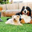 Družina Bešter: Psička Zoya je spet zdrava!