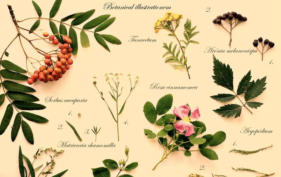 Herbarij: Izdelajte si knjigo rastlin (foto: Shutterstock)