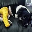 Alenka Godec je v skrbeh za poškodovano psičko