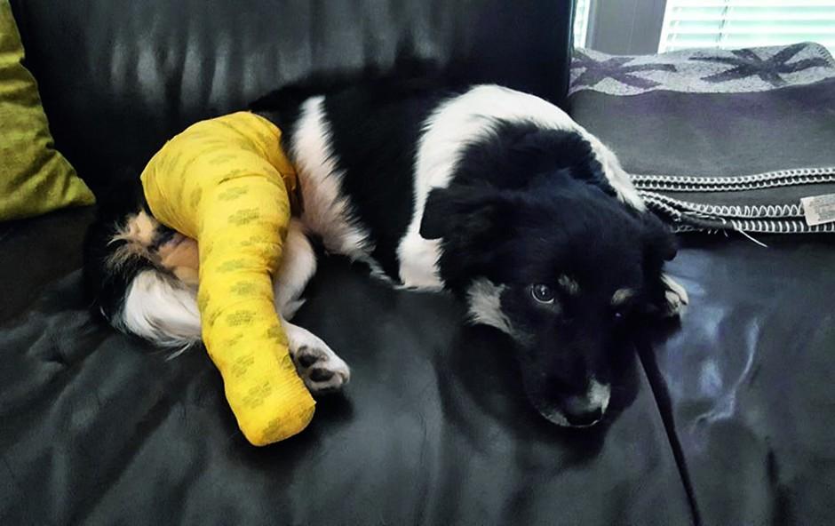 Alenka Godec je v skrbeh za poškodovano psičko (foto: osebni arhiv)